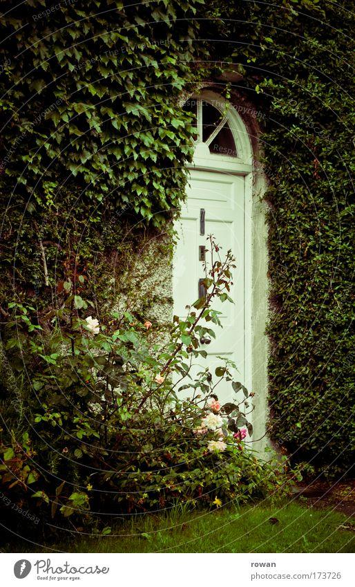 landhausidylle grün Haus Wand Mauer Gebäude Tür Fassade Rose Häusliches Leben Dorf Bauwerk Eingang ländlich Efeu Einfamilienhaus bewachsen