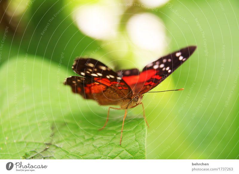 last but not least schön Tier Wiese Garten Park Wildtier Flügel Schmetterling Tiergesicht