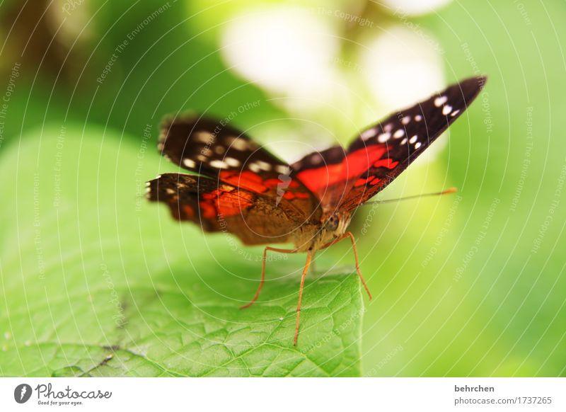 farbenfroh Natur Pflanze Tier Sommer Baum Sträucher Blatt Garten Park Wiese Wildtier Schmetterling Tiergesicht Flügel Beine Fühler Facettenauge 1 beobachten