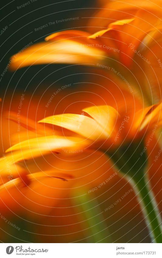 blumen gruß Farbfoto Außenaufnahme Nahaufnahme Detailaufnahme Menschenleer Tag Licht Starke Tiefenschärfe Zentralperspektive Frühling Sommer Pflanze Blume