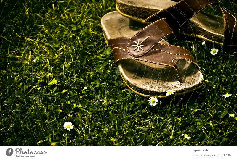 Mittagspause Natur Blume Gras Schwimmbad trendy Flipflops