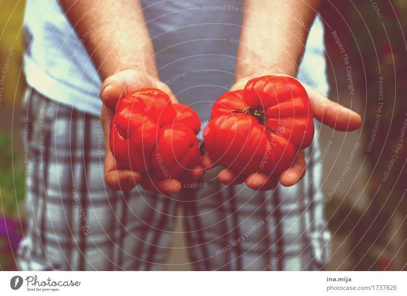 Bio-Tomaten Mensch Natur Jugendliche Mann Sommer Gesunde Ernährung Junger Mann rot Erwachsene Umwelt Gesundheit Garten Lebensmittel Frucht lecker