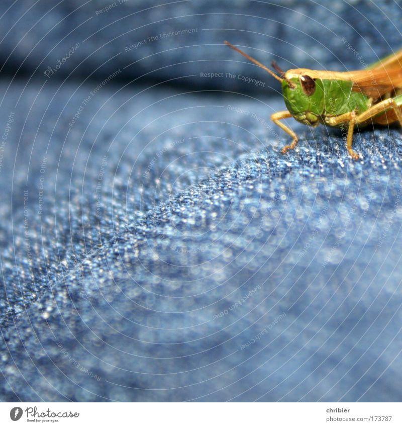 Der Grüne Punkt Natur grün blau Sommer ruhig Tier springen Kraft klein Jeanshose Pause Tiergesicht beobachten Leichtathletik Neugier Müdigkeit
