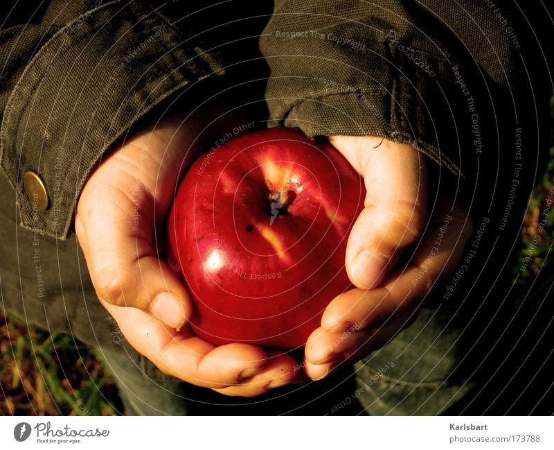 das fangen des apfels während des vorgangs des fallens. Mensch Natur Hand Leben Ernährung Herbst Junge Garten Gras Lebensmittel Gesundheit Kindheit Haut Frucht Finger Kind