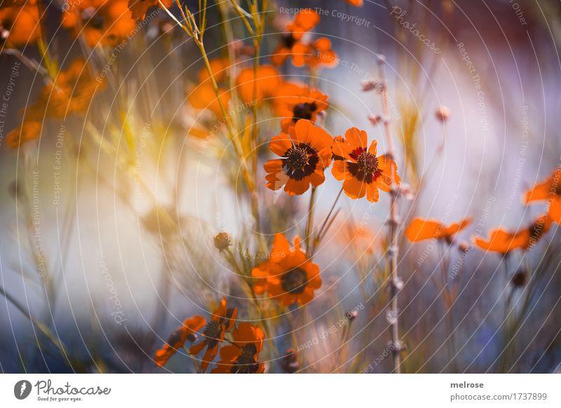 mit Leuchtkraft Natur Stadt Pflanze blau Sommer schön grün Blume Erholung Stil außergewöhnlich Stimmung orange träumen Feld leuchten
