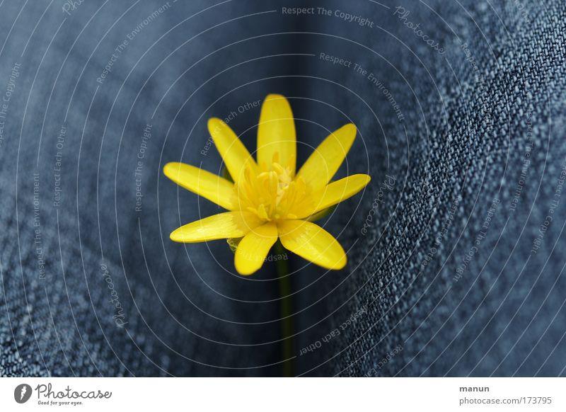 Goldene Mitte Natur blau Sommer Blume ruhig gelb Erholung klein Blüte Frühling Zufriedenheit Geburtstag Fröhlichkeit niedlich Romantik Stoff