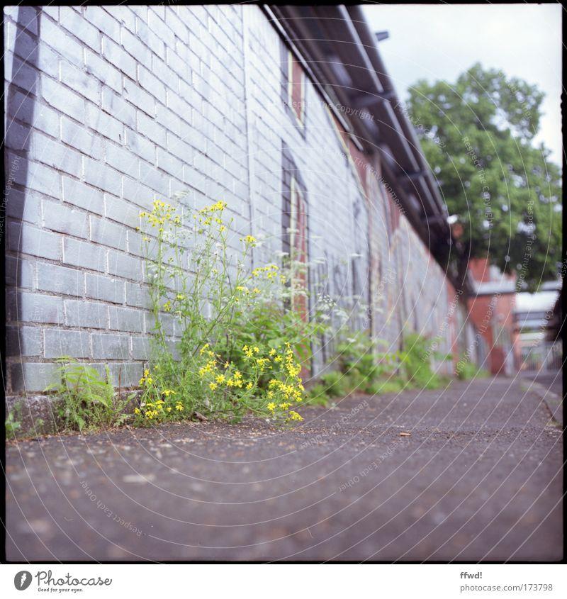 Urban sidewalk Farbfoto Gedeckte Farben Außenaufnahme Tag Schwache Tiefenschärfe Froschperspektive Graffiti Umwelt Pflanze Blume Wildpflanze Stadt Menschenleer