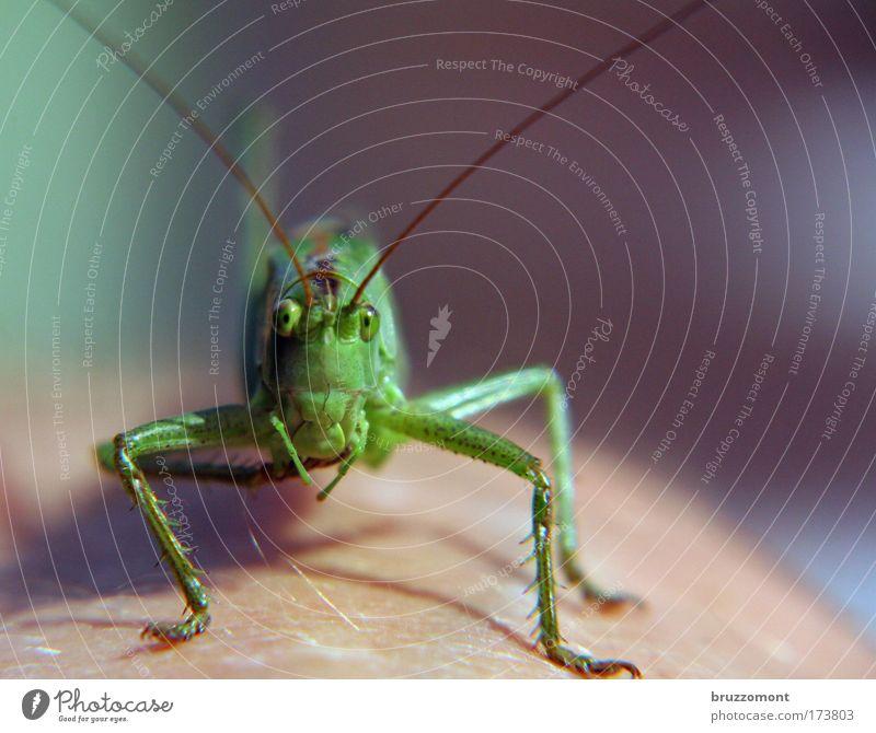 du und wieviel von deinen freunden Farbfoto Außenaufnahme Nahaufnahme Makroaufnahme Textfreiraum rechts Sonnenlicht Starke Tiefenschärfe Tierporträt