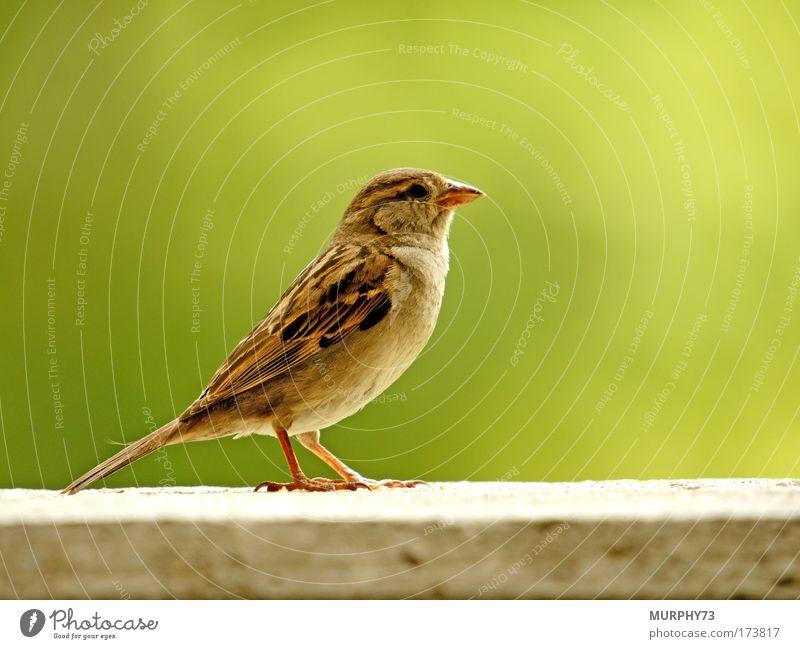 Vogelausstellung... Natur grün Tier grau braun Vogel Umwelt stehen Körperhaltung Tiergesicht Flügel beobachten Wildtier frech gestellt Krallen