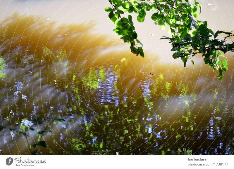 Vibration | Wasserschwingungen Natur Sonnenlicht Wind Pflanze Baum Blatt Teich See leuchten blau grün Stimmung Bewegung bizarr Klima Umwelt Farbfoto