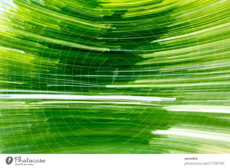 Foto panning im Garten Natur Pflanze grün Umwelt Hintergrundbild Stil Kunst außergewöhnlich Linie Streifen Grünpflanze