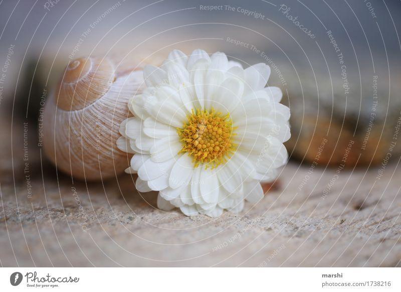 Flora&Fauna Natur Pflanze Blume Tier Schnecke 1 Stimmung Margerite Schneckenhaus Weinbergschnecken Stein Unschärfe Garten Farbfoto Außenaufnahme Nahaufnahme