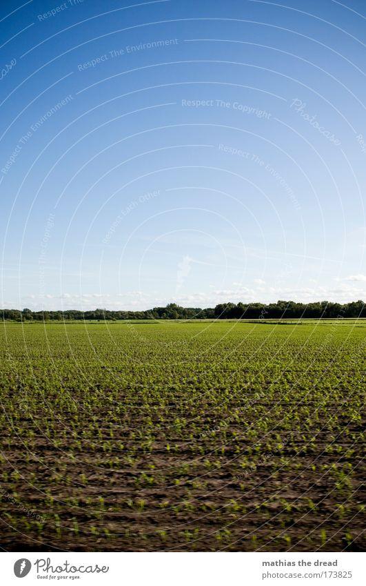 JUNGES FELD Himmel Natur grün Baum Pflanze Sommer Wolken Umwelt Landschaft Wiese Frühling Luft Horizont Erde Feld Wachstum