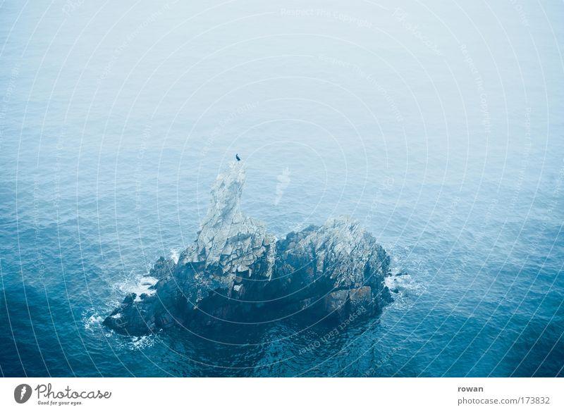 einsamer sitzplatz Meer blau ruhig Einsamkeit Tier Stein Vogel Wellen Nebel Felsen sitzen Insel hocken Sitz ruhen