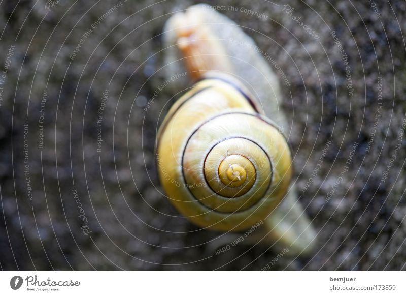 Schnegge Auge braun Beton berühren Appetit & Hunger feucht Schnecke Spirale Fühler Vorsicht schleimig Schneckenhaus Weinbergschnecken