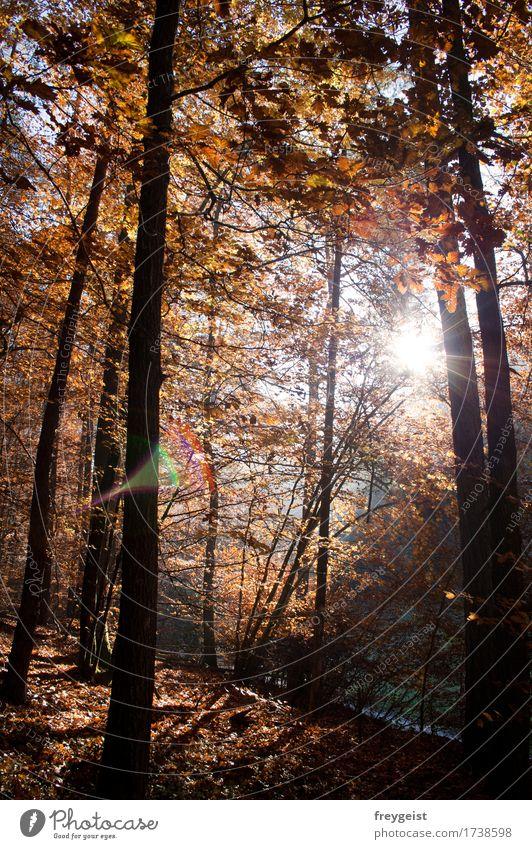 Breaking through 2 Natur Sonne Baum Landschaft Erholung ruhig Wald Umwelt Herbst Freiheit Zufriedenheit Freizeit & Hobby wandern