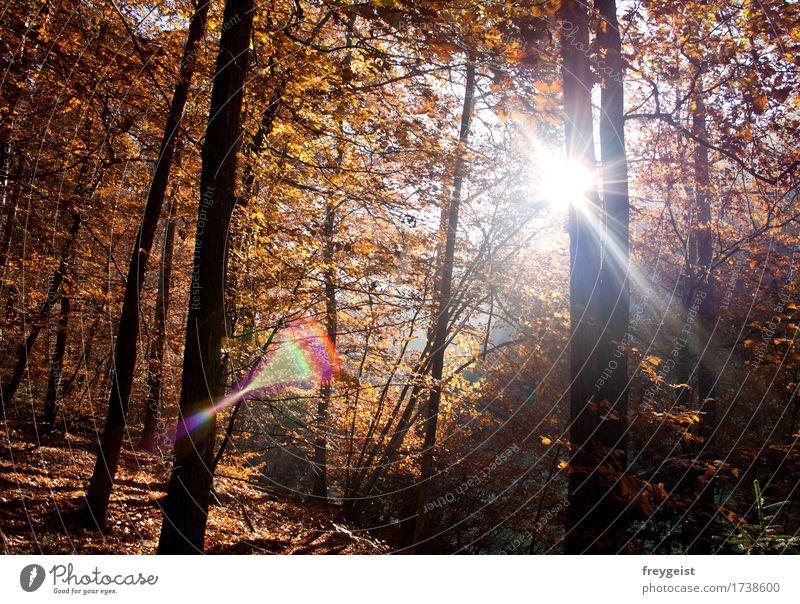 Breaking through 4 harmonisch Erholung ruhig Ausflug Umwelt Natur Landschaft Sonne Sonnenaufgang Sonnenuntergang Sonnenlicht Herbst Baum Wald wandern frei