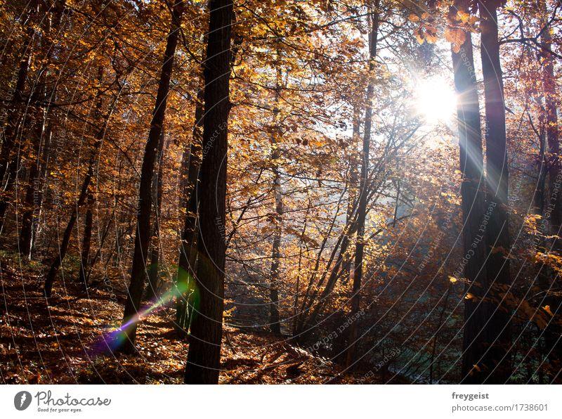 Breaking through 3 Freizeit & Hobby Umwelt Natur Landschaft Sonne Sonnenaufgang Sonnenuntergang Sonnenlicht Herbst Baum Wald frei Freiheit Farbfoto