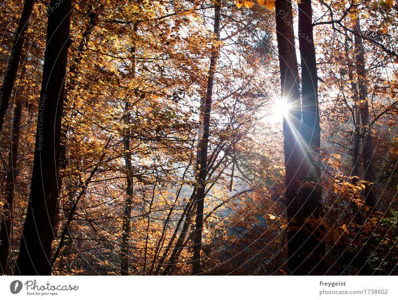 Breaking through 1 Natur Sommer Sonne Baum Landschaft Erholung ruhig Wald Umwelt Herbst Freiheit Zufriedenheit Freizeit & Hobby frei wandern genießen
