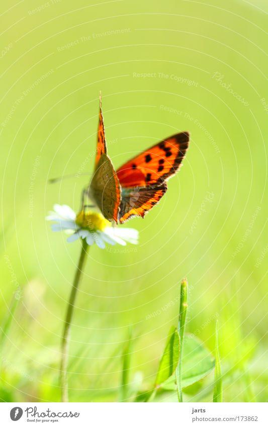 sonnenschein Natur schön Pflanze Sommer ruhig Tier Wiese Blüte Park frei ästhetisch natürlich Gelassenheit Schmetterling Wildtier exotisch