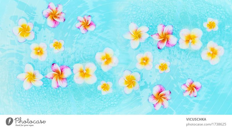 Bunte Frangipani Blumen in türkisblauem Wasser Stil Design Wellness Erholung Spa Schwimmbad Ferien & Urlaub & Reisen Sommer Natur Pflanze Fahne gelb
