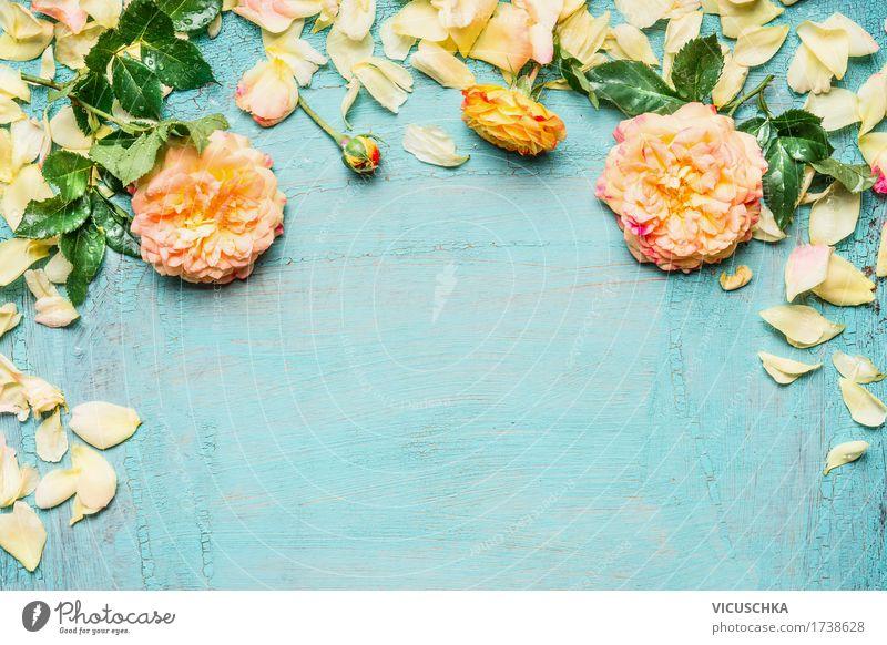 Gelbe rosa Rosen mit Blättern auf hellblauem Hintergrund Natur Pflanze Sommer Blume Blatt gelb Blüte Liebe Hintergrundbild Stil Garten Feste & Feiern Design