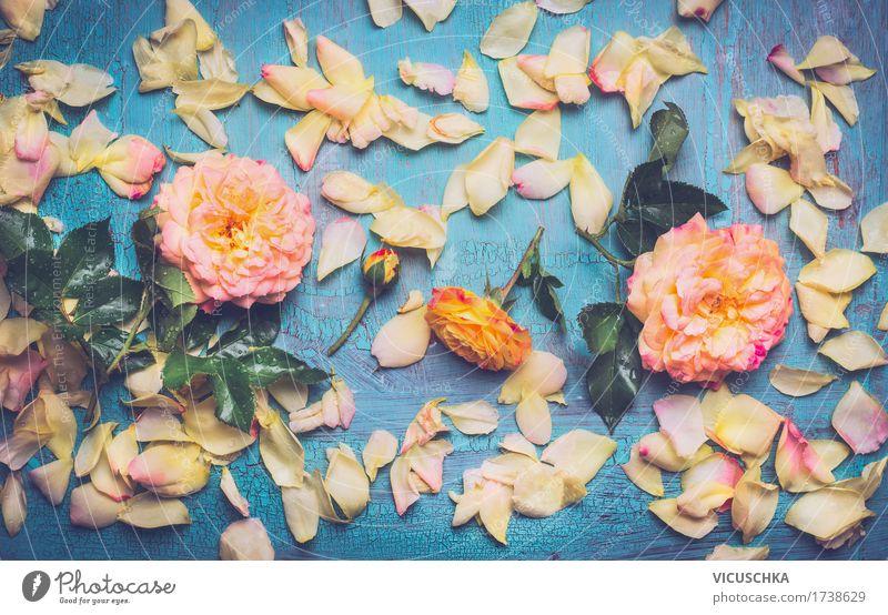 Rosen mit Blütenblättern auf blauem Hintergrund Stil Design Dekoration & Verzierung Feste & Feiern Natur Pflanze Blume Blatt Blühend Liebe rosa Duft