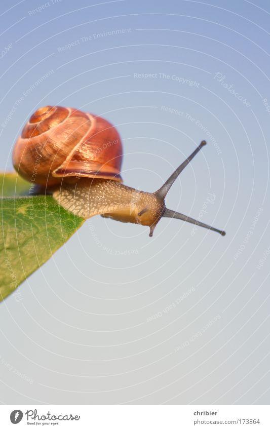 Vollbremsung!!! Natur blau grün Sommer Pflanze Tier oben Bewegung braun Angst frei Geschwindigkeit gefährlich beobachten berühren nah