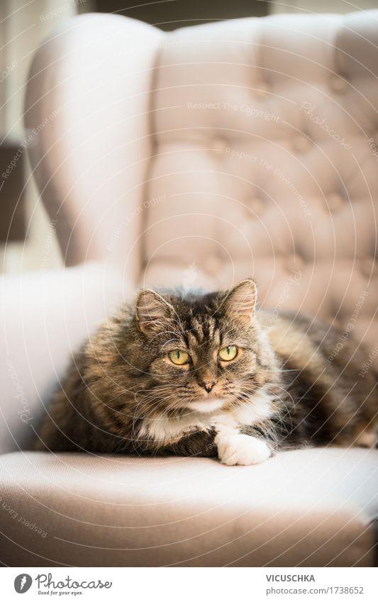 Süße Katze liegt auf Ohren Sessel zu Hause Natur Tier Freude Lifestyle Stil Design Wohnung Häusliches Leben liegen Sofa Haustier Wohnzimmer gemütlich