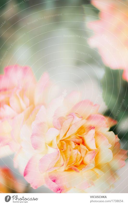 Schöne Rosen, Natur Hintergrund Lifestyle Stil Design Sommer Garten Pflanze Schönes Wetter Blume Blatt Blüte Park gelb rosa Hintergrundbild Symbole & Metaphern