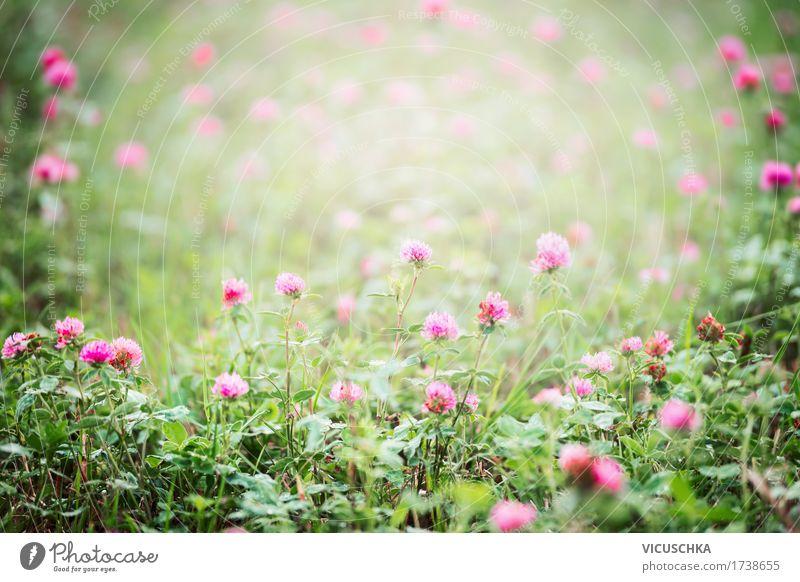 Feld mit blühende Klee Sommer Umwelt Natur Landschaft Pflanze Schönes Wetter Blume Blatt Blüte Wildpflanze Wiese rosa Design Kleeblüte Farbfoto Außenaufnahme