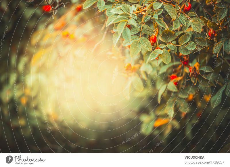 Herbst Garten von VICUSCHKA. Ein lizenzfreies Stock Foto zum Thema ...