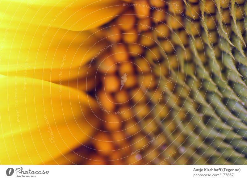 Fire Farbfoto Außenaufnahme Nahaufnahme Detailaufnahme Makroaufnahme Menschenleer Tag Kontrast Sonnenlicht Sonnenstrahlen Zentralperspektive Blick in die Kamera