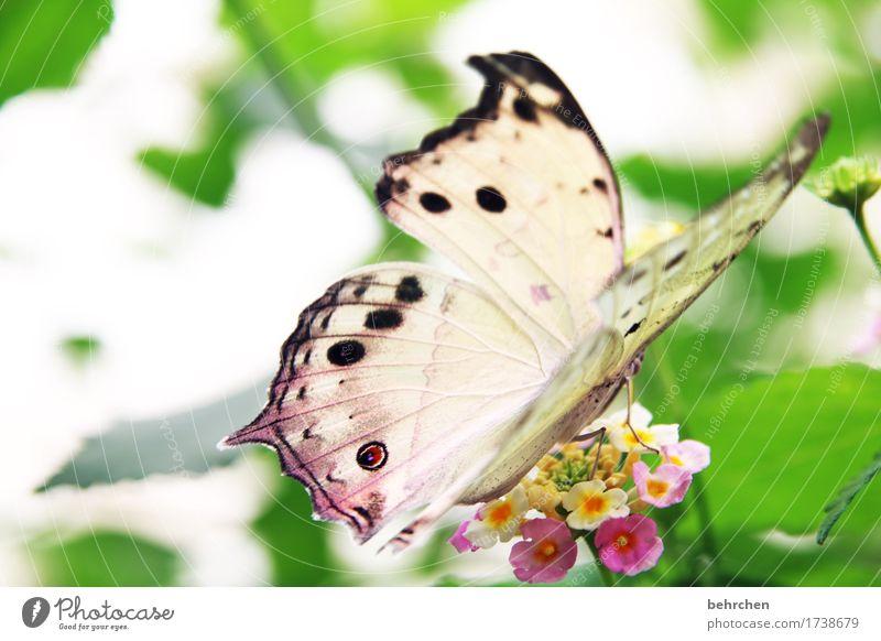 perlmutt Natur Pflanze schön Baum Blume Erholung Blatt Tier Blüte Wiese Garten außergewöhnlich fliegen hell Park elegant