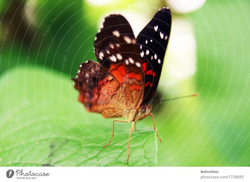...nachher Natur Pflanze Tier Baum Sträucher Blatt Garten Park Wiese Wildtier Schmetterling Tiergesicht Flügel 1 beobachten Erholung fliegen Fressen