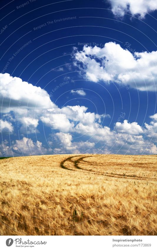 Ein Bett im Kornfeld Natur Himmel weiß blau Pflanze Sommer Wolken gelb oben Gras Wege & Pfade Wärme Landschaft Luft hell Feld