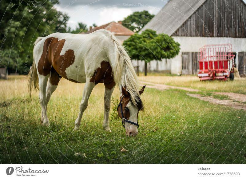 Landleben Natur Tier Nutztier Pferd 1 füttern genießen braun grün rot Glück Zufriedenheit Tierliebe Gelassenheit ruhig Erholung Farbfoto Außenaufnahme