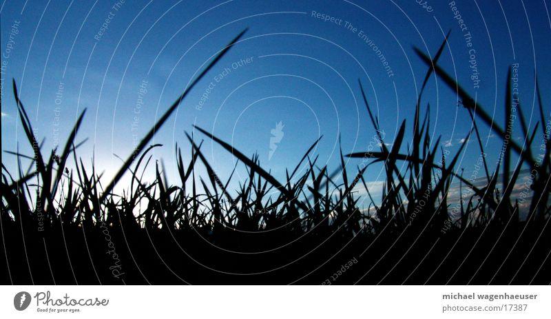 Grashalme Wiese Halm Wolken Froschperspektive Rasen Himmel Sonne