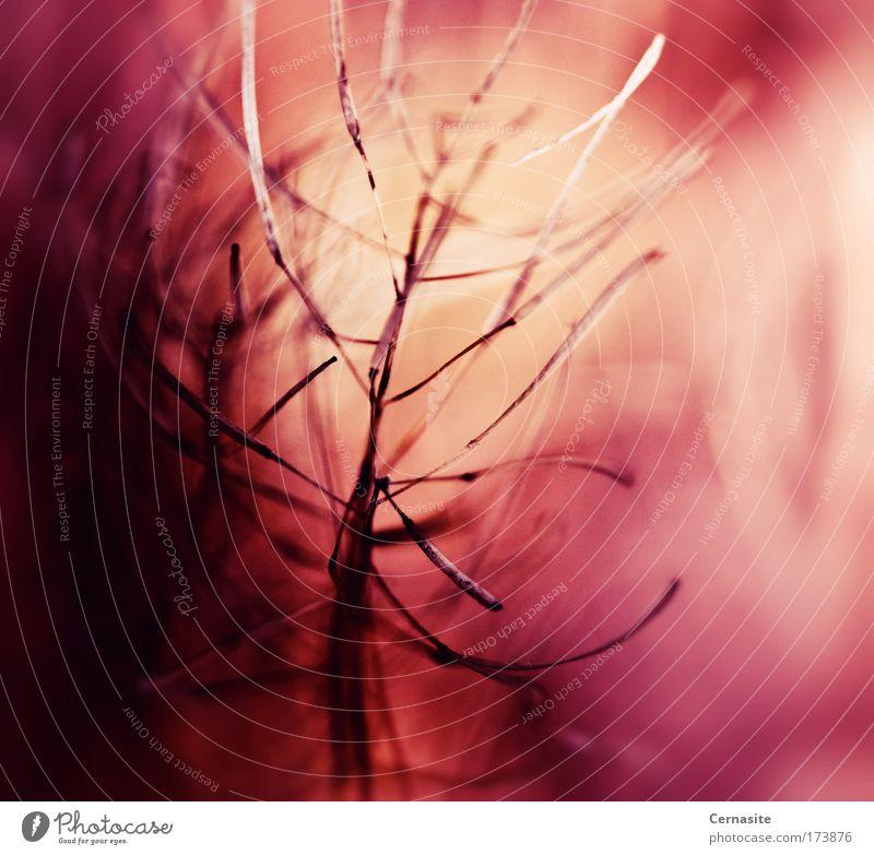 Mit unsichtbaren Augen Farbfoto mehrfarbig Außenaufnahme Nahaufnahme Detailaufnahme Makroaufnahme Experiment abstrakt Menschenleer Tag Licht Schatten Kontrast