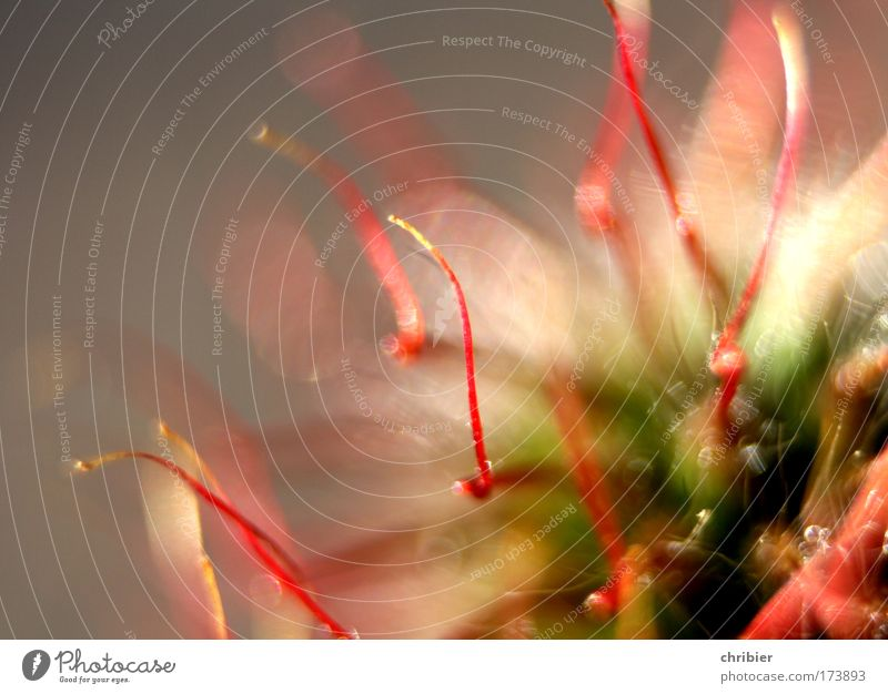 Feuerwerk... Natur schön Blume grün Pflanze rot Freude Farbe Blüte Glück Feste & Feiern rosa Romantik nah Spitze berühren