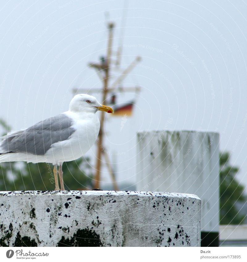 [KI09.1] Happy Birthday, ces! Tier Vogel sitzen Möwe Poller Mast Ostsee Möve Farbfoto Außenaufnahme