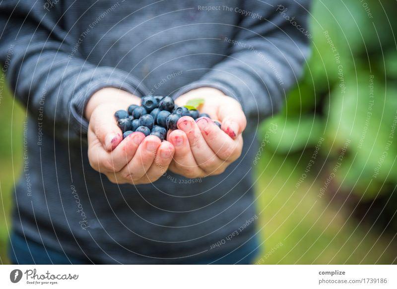 Frisch gepflückte Blaubeeren in Kinderhand Lebensmittel Frucht Dessert Marmelade Ernährung Picknick Bioprodukte Vegetarische Ernährung Gesundheit