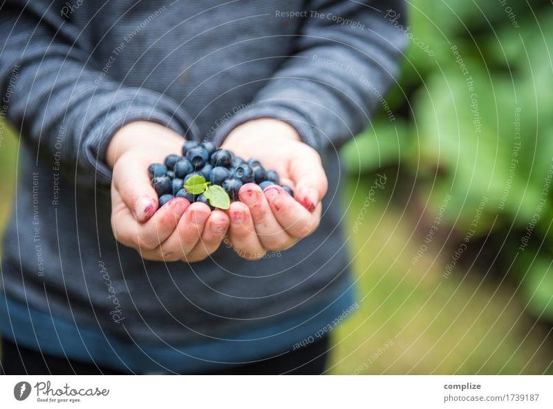 Blaubär Lebensmittel Frucht Blaubeeren Ernährung Essen Picknick Bioprodukte Vegetarische Ernährung Diät Gesundheit Gesunde Ernährung Zufriedenheit Kind Schule