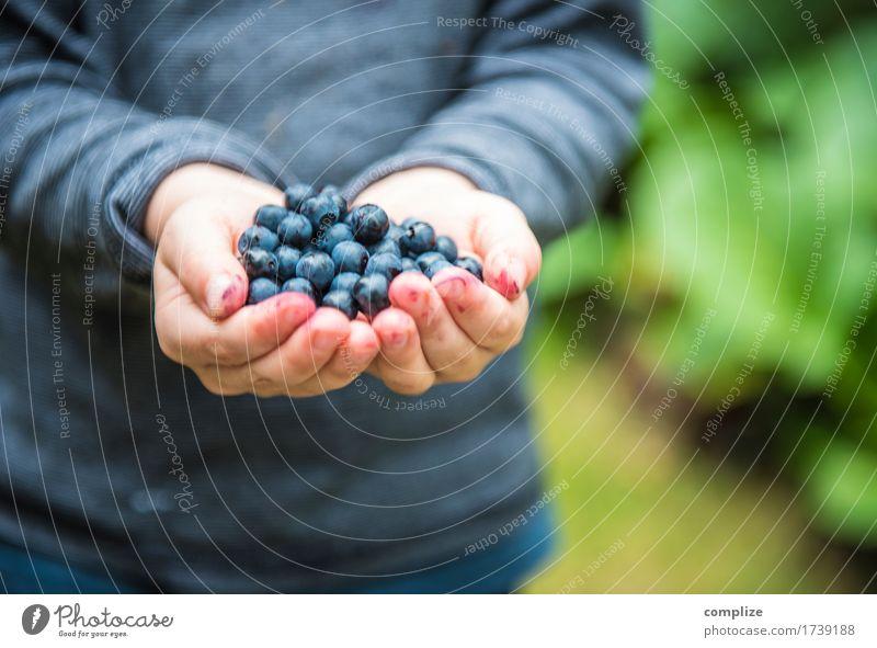 im Blaubeerenwald Kind Ferien & Urlaub & Reisen Pflanze blau Gesunde Ernährung Hand Wald Leben Essen Gesundheit Lebensmittel Frucht Körper Finger stoppen