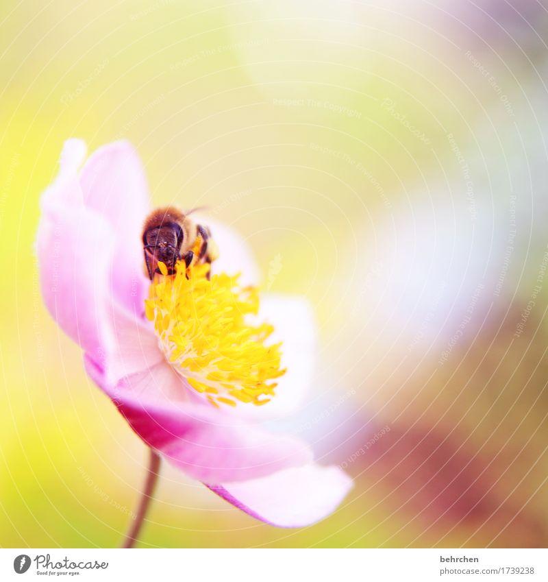 orientierung | die einzig wahre jahreszeit! Natur Pflanze Sommer schön Blume Blatt Tier Wärme Blüte Wiese Garten fliegen Park Wildtier Flügel Blühend
