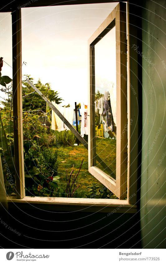 Gartenlaube Sommer ruhig Erholung Fenster Gras offen Sträucher Fensterscheibe Wäsche trocknen Gartenhaus Fensterrahmen Fensterblick