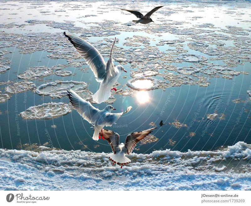 Möwen am Strom Natur blau Wasser Sonne Landschaft Tier Strand Winter natürlich Küste Schnee Stimmung Vogel Eis Fröhlichkeit Flügel