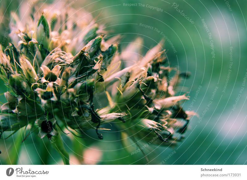 Pflanzending Natur Pflanze Sommer ruhig Einsamkeit Wiese Gras träumen Traurigkeit elegant ästhetisch Sträucher weich Kitsch beobachten