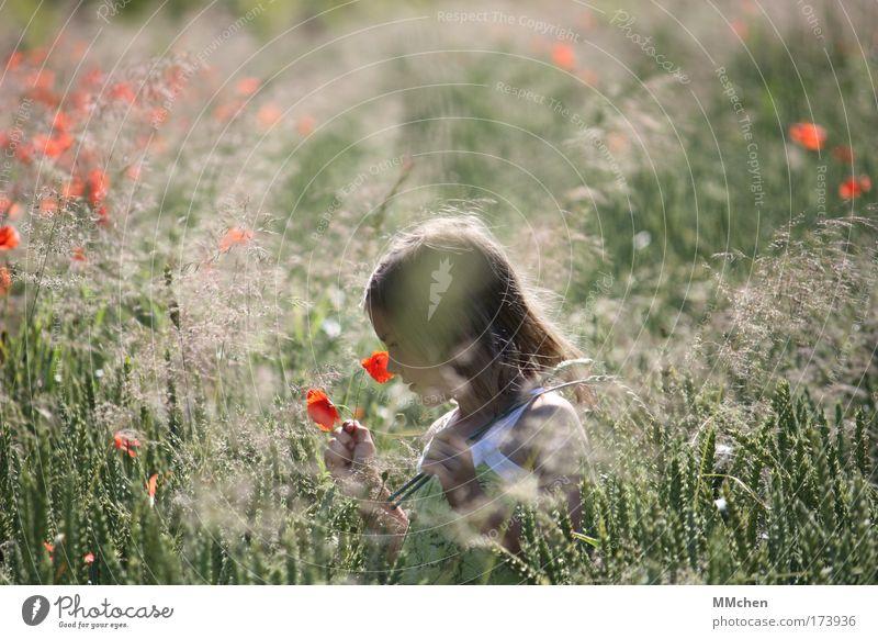 ich schenk´ dir heut ein blümchen Mensch Kind Natur grün rot Ferien & Urlaub & Reisen Mädchen Sommer Blume klein Glück Kindheit Zufriedenheit Feld wild laufen
