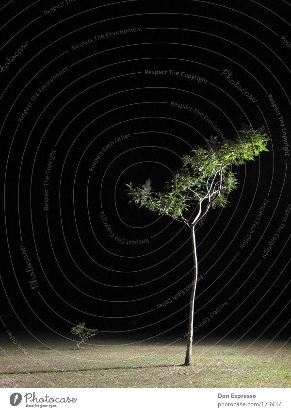 Nachtbaum Natur Baum Gras Garten Park Umwelt Surrealismus Nachtaufnahme